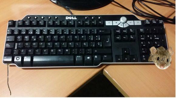 tecladoraton